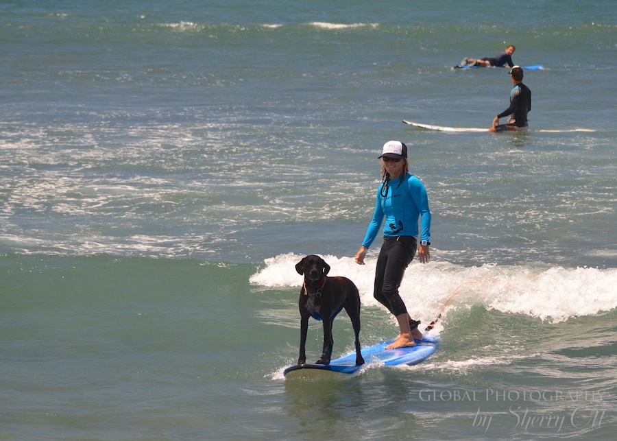 Maui Hawaii Adventures surfing dog