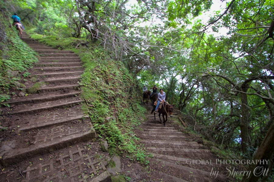 Molokai Hawaii Adventures 1 trail switchback(1)