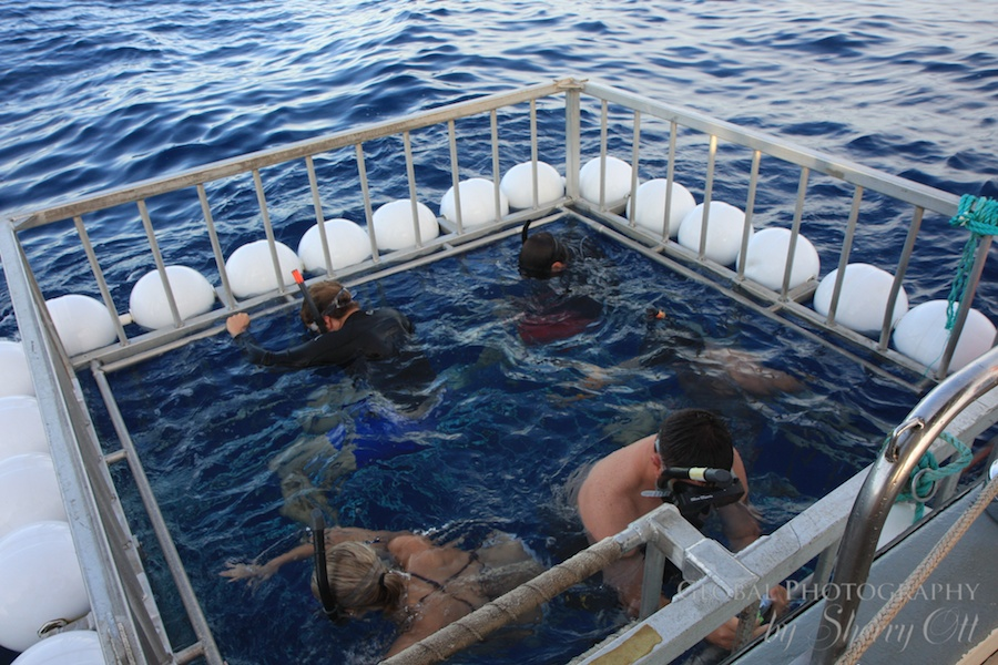 Oahu Hawaii Adventures Me in shark cage