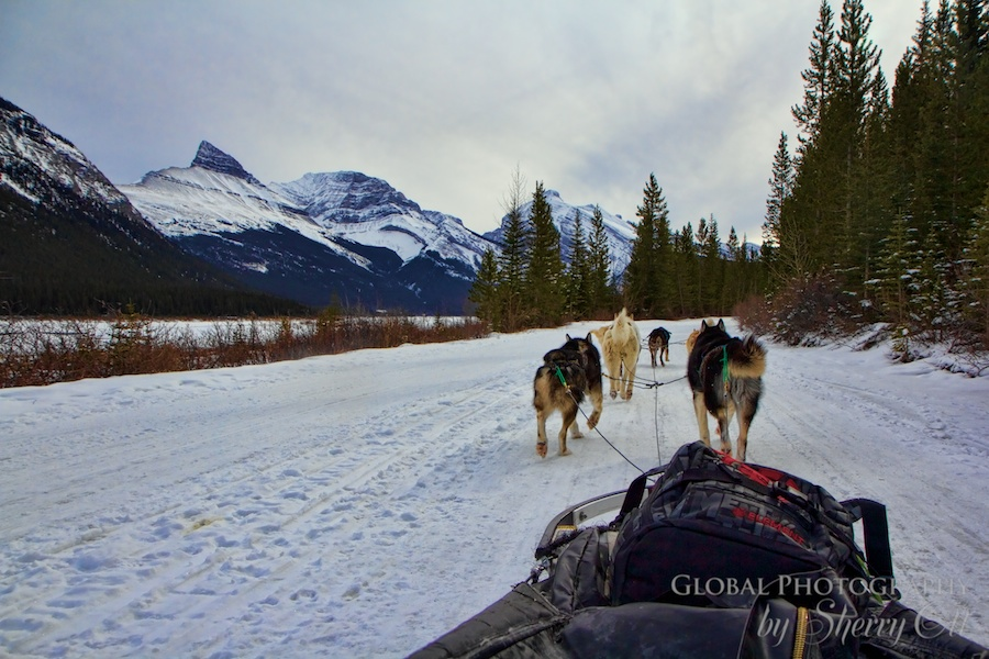 The best dog sledding in the area (drive your own team) is out of Canmore with Snowy Owl.