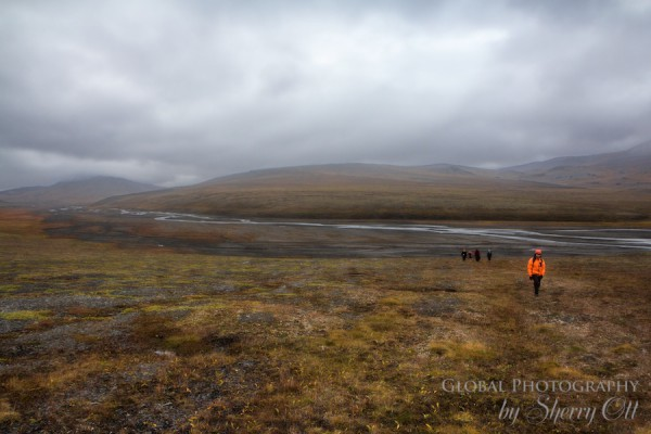 Hiking Wrangel Island
