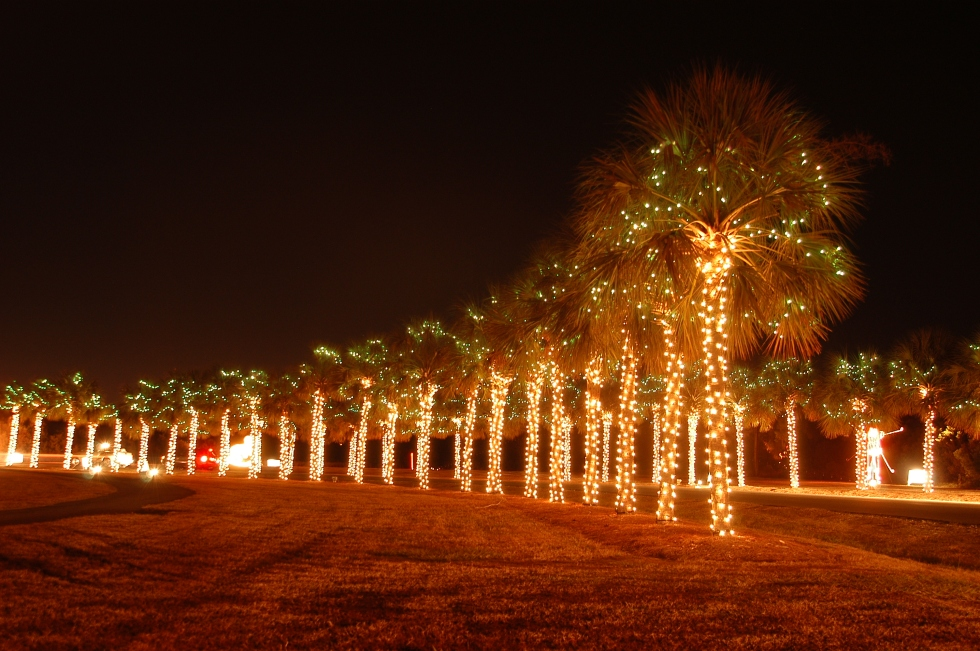 Palm Trees at the Holiday Festival of Lights
