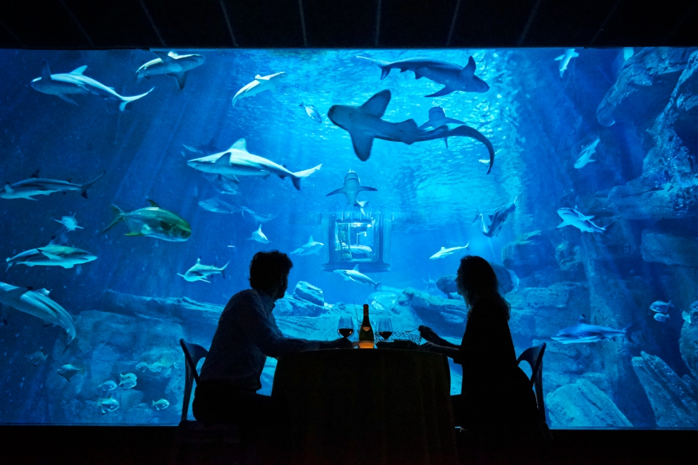Dinner with Sharks - Air B&B