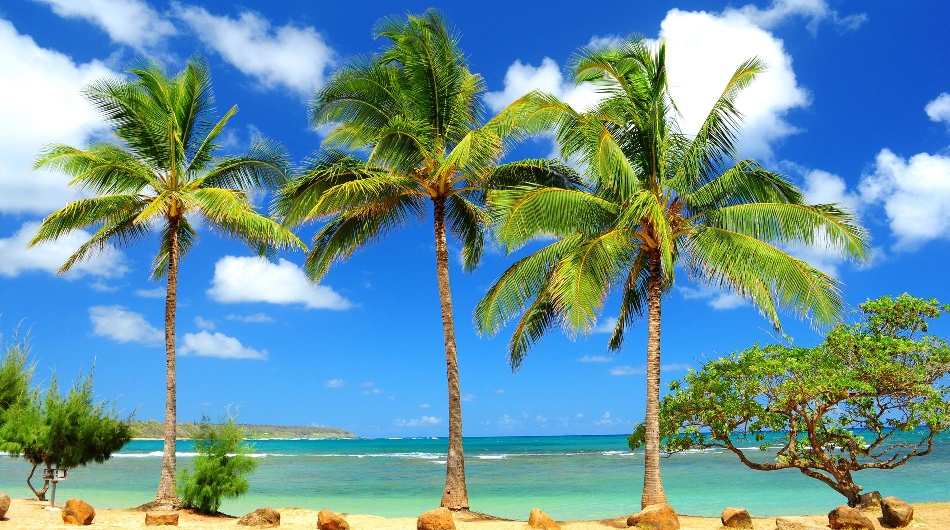 InsureMyTrip Insiders Share Their Favorite Caribbean Islands!